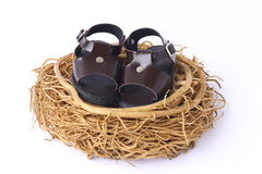 Stock Photo: Baby shoes in nest Stock Image