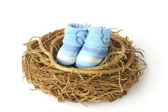 Stock Photo: Baby shoes in nest Royalty Free Stock Photo