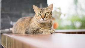 Stock Photo - a cat looking selective eye focus Royalty Free Stock Photo