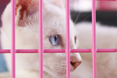 Stock Photo:Close up the cat in the cage. Sad animal eye after Stock Image