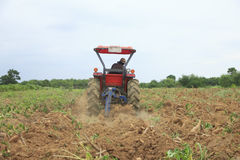 Stock Photo: Farmer was drove tractor plowing the soil to picup. Farmer was drove tractor plowing the soil to harvest cassava royalty free stock photos
