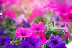 Stock Photo:Flower Bokeh for Background. Blurry Stock Photography