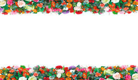 Stock Photo:flowers frame in white background isolated Royalty Free Stock Images