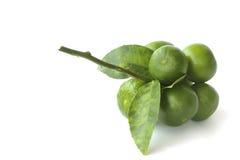 Stock Photo:Fresh lemon isolated on white Stock Images
