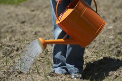 Stock photo of a garden being watered. Plants being watered in a garden Stock Image