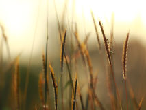 Stock Photo - Grass. Fresh green spring grass with dew drops clo Royalty Free Stock Photos