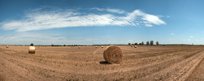 Stock Photo of a harvested field with straw bales in summer. Panorama Royalty Free Stock Photo