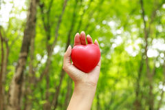 Stock Photo - Heart in hands on nature background Stock Image
