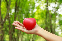 Stock Photo - Heart in hands on nature background Royalty Free Stock Photos