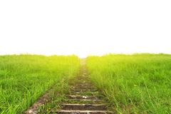 Stock Photo:Lane in meadow and sunlight. Nature design Royalty Free Stock Photography