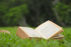 Stock Photo:Open book with empty pages in the grass Royalty Free Stock Photo