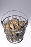 Oysters in Bucket Stock Image