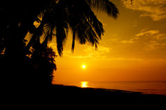 Stock Photo:Palm forest silhouettes on sunrise Royalty Free Stock Photo