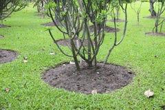 Stock Photo:planting tree Royalty Free Stock Photos