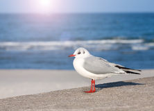 Stock photo of a seagull Stock Images