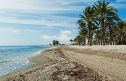 Stock Photo: Seascape. Palm tree on  sand beach and island in the sea under blue sky Stock Photography