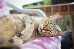 Stock Photo - Sleeping Cat. Looking snap shot clean full Stock Photography