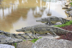 Stock Photo: Statue crocodile in front of crocodile ponds Royalty Free Stock Image