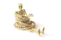 Stock Photo:Still life with Human skeleton with rope on white Royalty Free Stock Photo
