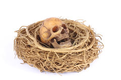 Stock Photo:Still life with skull in abandoned bird nest Royalty Free Stock Images