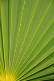 Stock Photo - Sugar palm leaf texture pattern background Royalty Free Stock Photography
