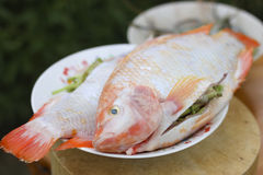 Stock Photo:Tilapia ruby Stock Images