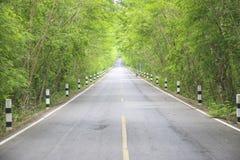 Stock Photo:Tree Tunne Stock Photography