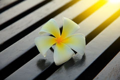 Stock Photo - A white plumeria on rustic wood floor Royalty Free Stock Image