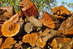 Stock pile of firewood Stock Image