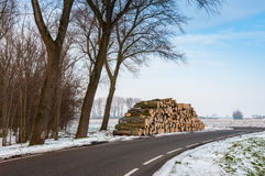 Stock pile sawed trees along the side of the road in winter Royalty Free Stock Image