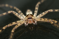 Stock-Spinne Lizenzfreies Stockbild