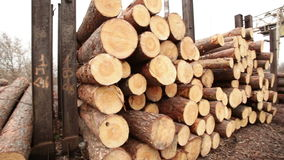 Stock timber wood stock video footage