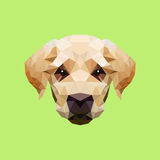 Stock vector dog`s face with polygonal style Royalty Free Stock Photos