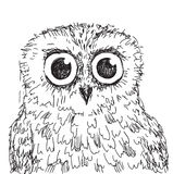 Stock vector hand drawn owl illustration Royalty Free Stock Photography