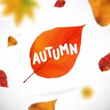 Stock vector illustration Autumn falling leaves. Autumnal foliage fall and poplar leaf flying in wind motion blur. Royalty Free Stock Photos