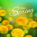 Stock vector illustration Hello, Hi Spring. Realistic dandelion, taraxacum, blurred defocused background. Macro flowers. Green. Bokeh. Templates for placards Royalty Free Stock Images