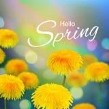 Stock vector illustration Hello, Hi Spring. Realistic dandelion, taraxacum, blurred defocused background. Macro flowers. Green. Bokeh. Templates for placards Stock Photo