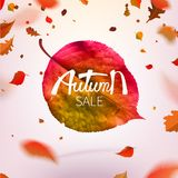 Stock vector illustration sale Autumn falling leaves. Autumnal foliage fall and poplar leaf flying in wind motion blur. Autumn. Design. Templates for placards Stock Images
