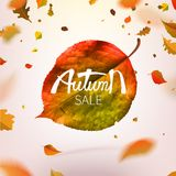 Stock vector illustration sale Autumn falling leaves. Autumnal foliage fall and poplar leaf flying in wind motion blur. Autumn. Design. Templates for placards Stock Photography