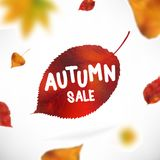 Stock vector illustration sale Autumn falling leaves  Stock Image