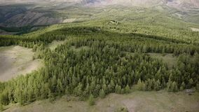 Stock video footage Flying over coniferous forest stock video