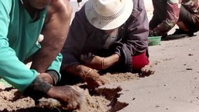 Stock Video Footage Women Are Dug Out Of The Sand Shells, Folk Craft, Thailand Fisherman stock video