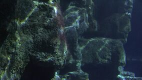 Reflections in underwater rock formation. Stock video in 4k or HD resolution stock video