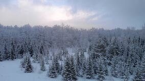 Icy forest landscape