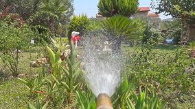 Hose Watering Garden. This stock video shows a hose running and being used to water a garden on a summer day. Use this clip to establish a bright summer day stock video footage