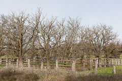 Stock yards and trees Stock Images