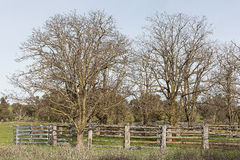 Stock yards and trees Stock Photography