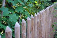 Stockade fence with half-round posts. Simple wooden fence along a hedge of maple shrubs constructed with half-round boards pointed at the top Royalty Free Stock Image