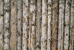 Stockade of pine logs. Stockade, a fence made of pine logs Royalty Free Stock Photography