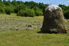Stocked hay on the meadow Royalty Free Stock Photos